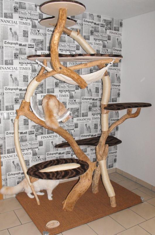 katzentr ume katzenbaum der besondere naturkratzbaum. Black Bedroom Furniture Sets. Home Design Ideas